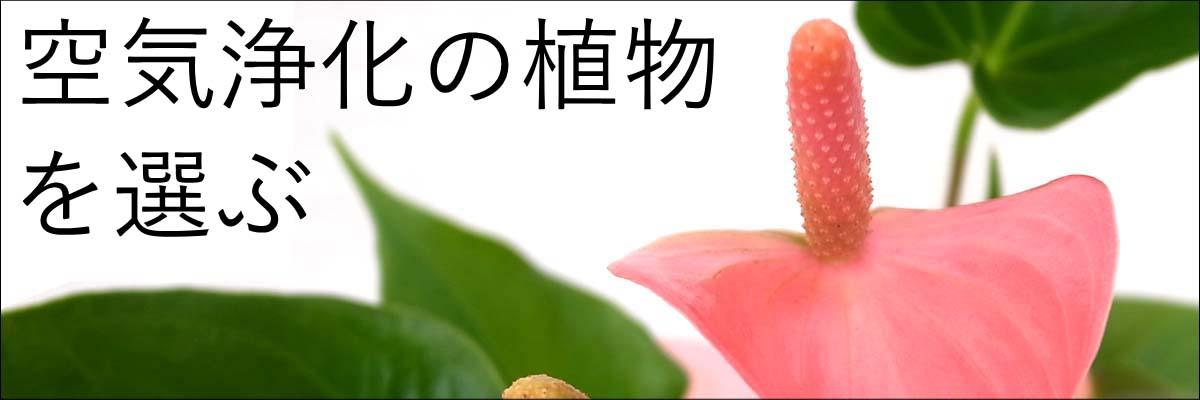 kogata-kanyou.jpg
