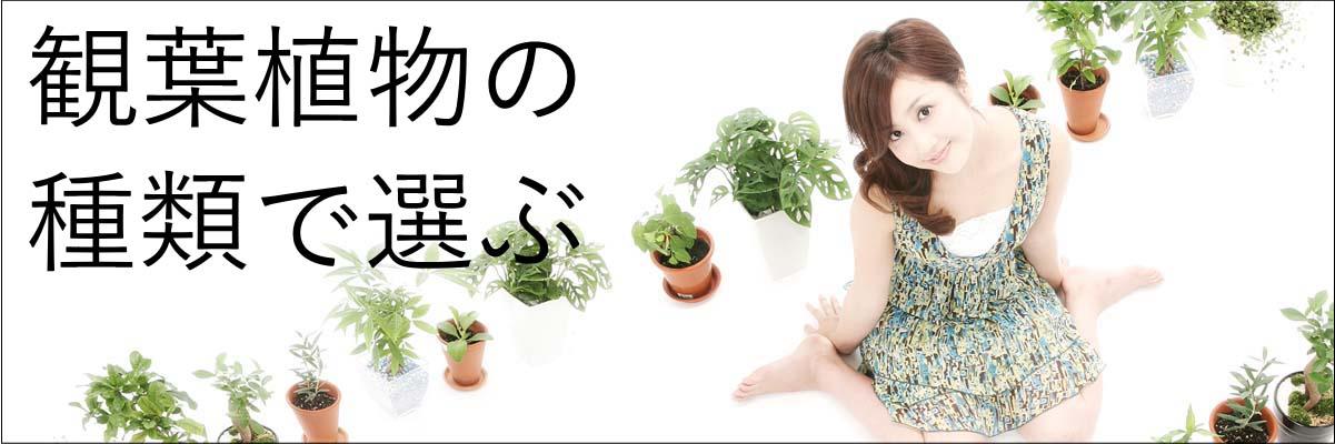 oogata-kanyou.jpg